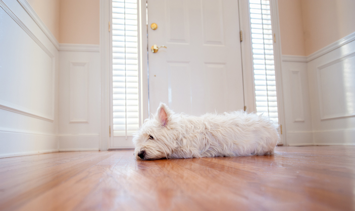 Tips for Cleaning House for Pet Owners in Kansas City